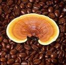 Ganoderma Lucidum Kaffee - Vorteile